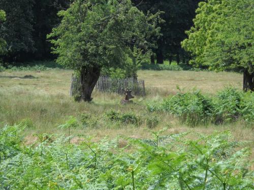 森の中の鹿_2548.JPG